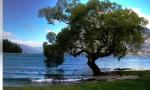 Queenstown tree